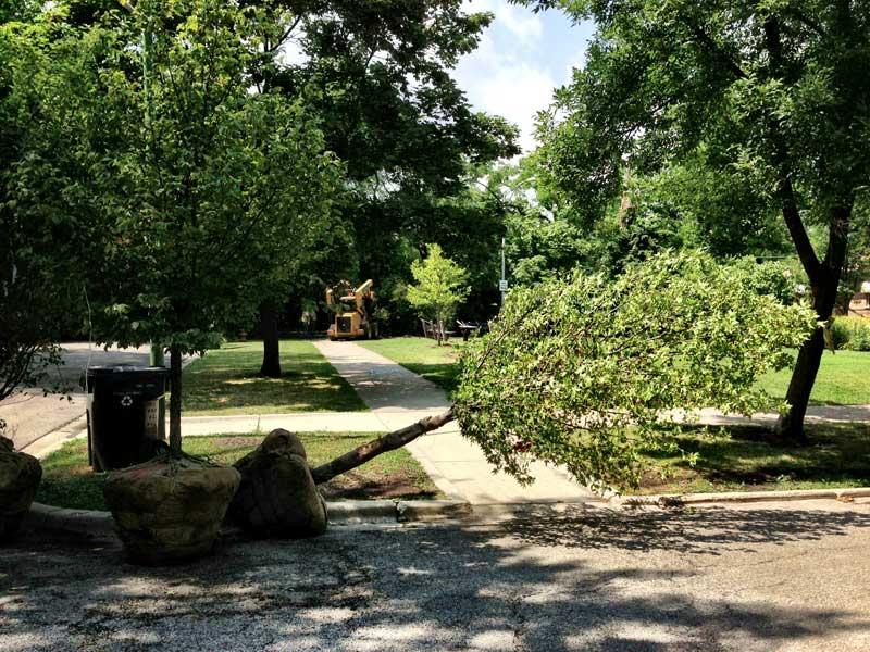 New trees for Sunken Garden Park