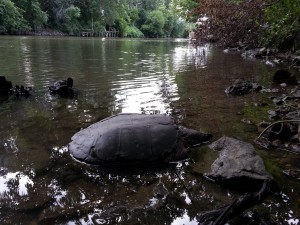 Jacob Park's Resident Turtle